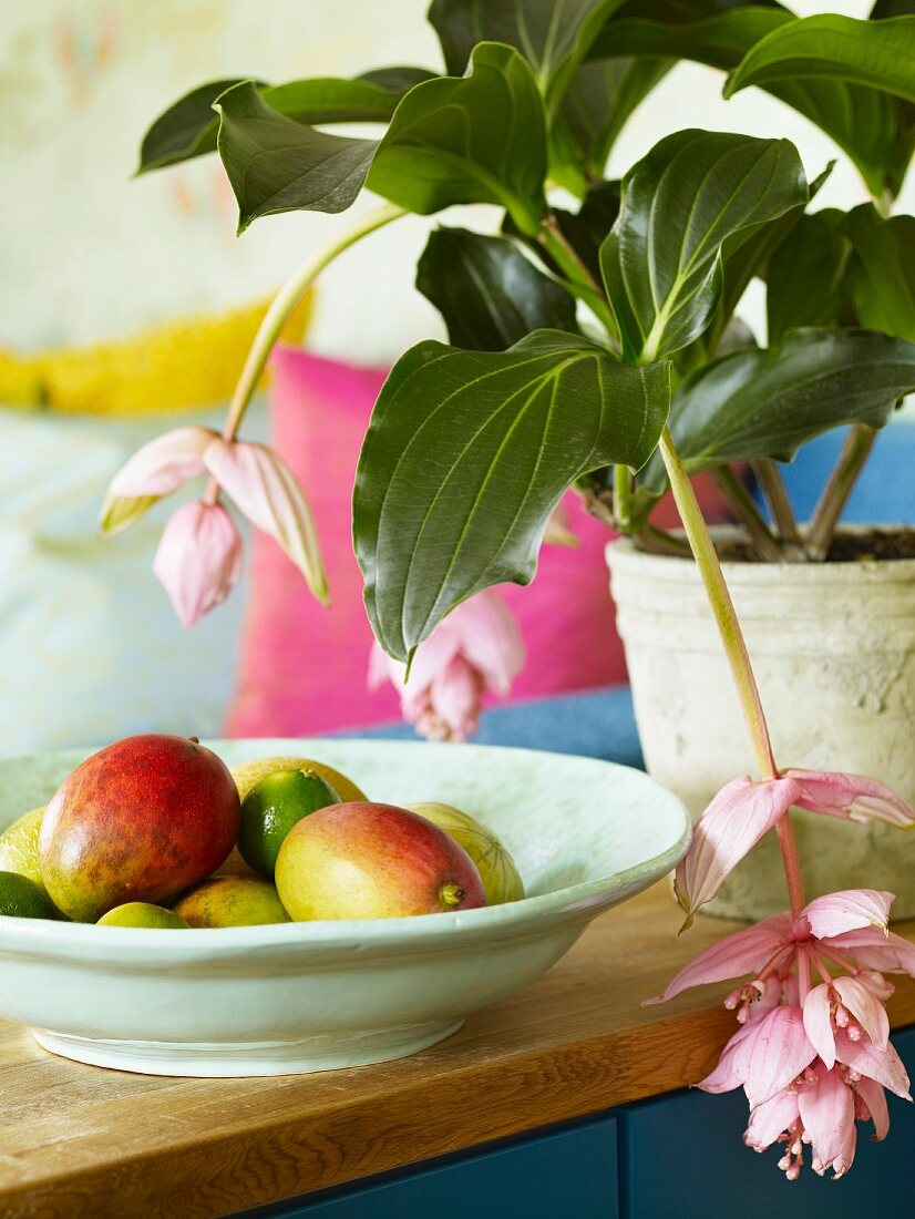Bowl of tropical fruit next to pink-flowered potted plant