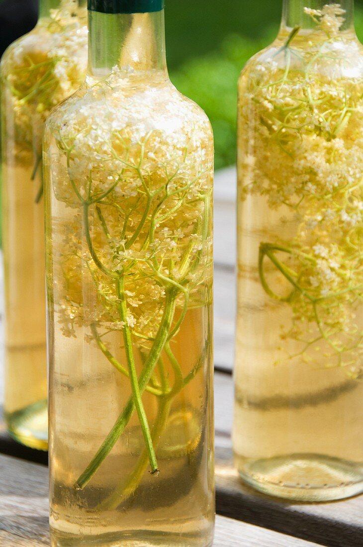 Elderflowers in bottles of vinegar