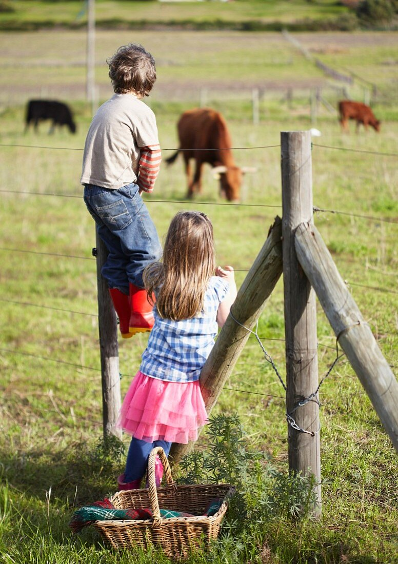 Children next to fence in front of field of cows