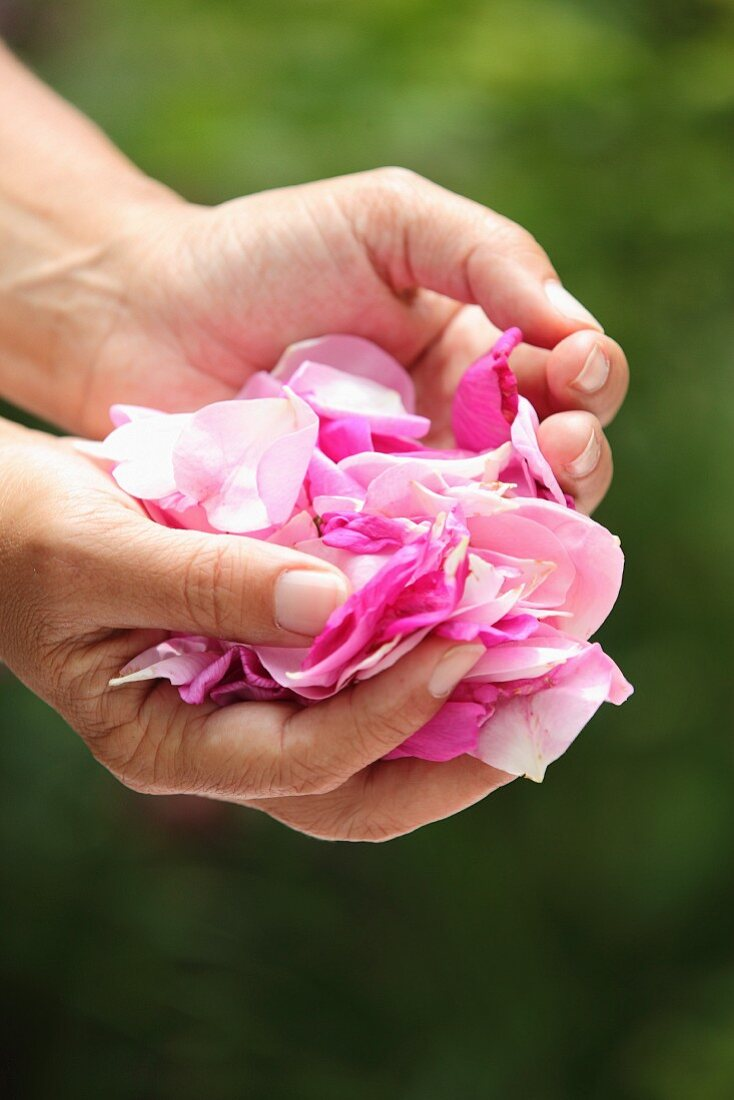 A woman holding pink rose petals