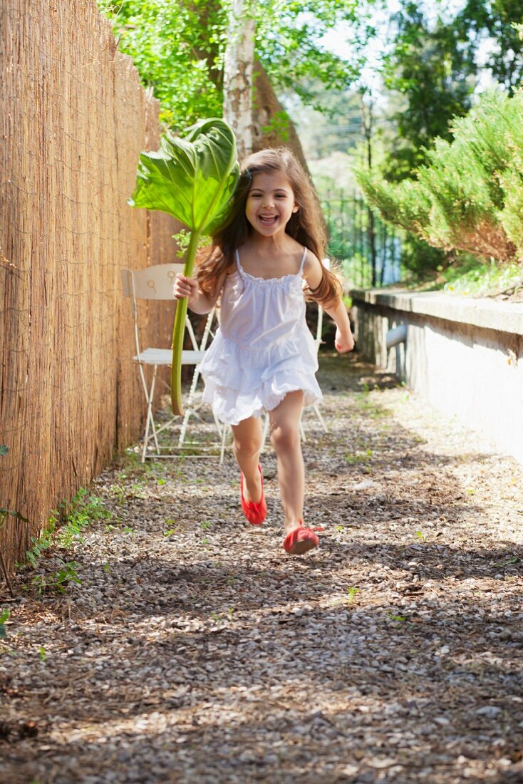 Little girl running along next to garden fence holding rhubarb leaf