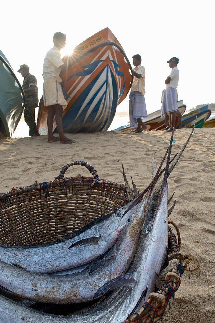 Swordfish in a basket and fishermen on the beach at Arugam Bay (Sri Lanka)