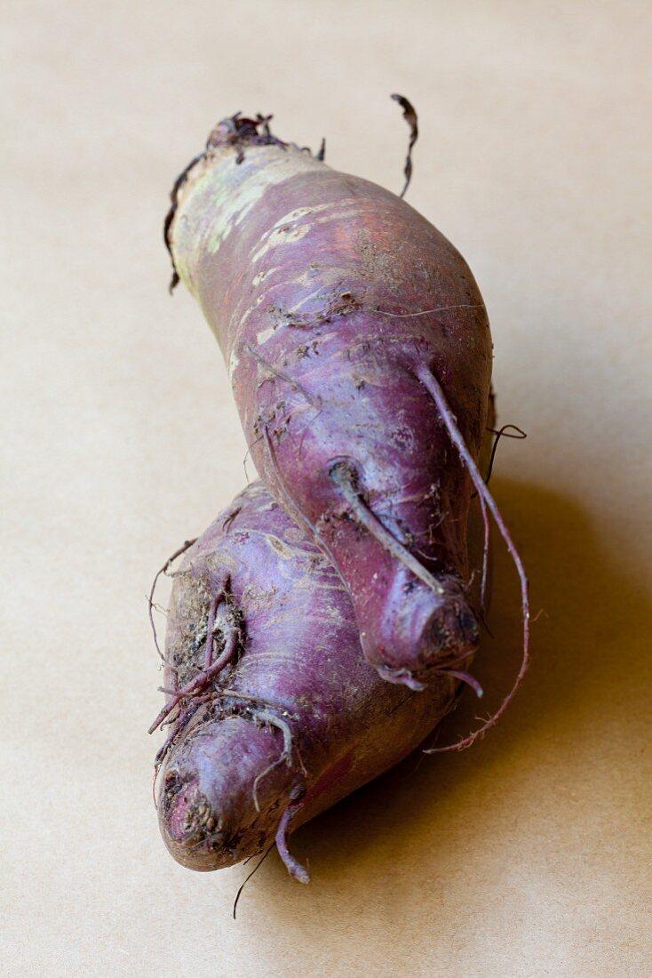 A red turnip (organic)
