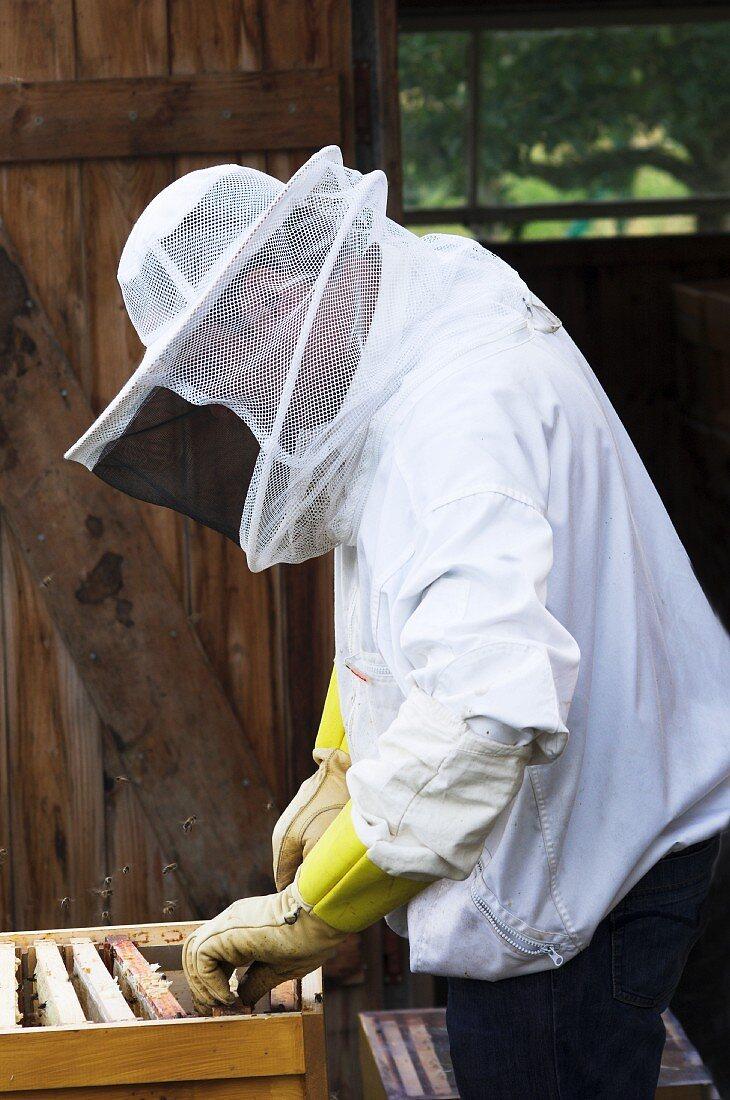A beekeeper checking individual honeycombs