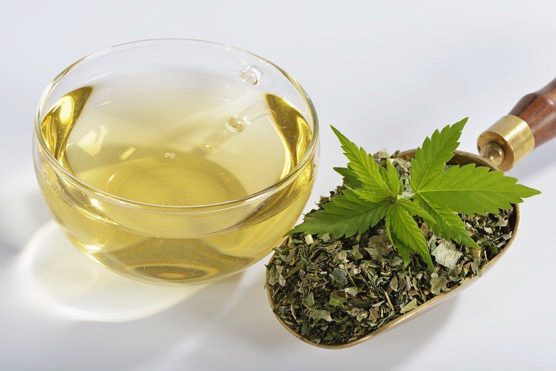 Hemp (Cannabis sativum) dried and brewed as tea