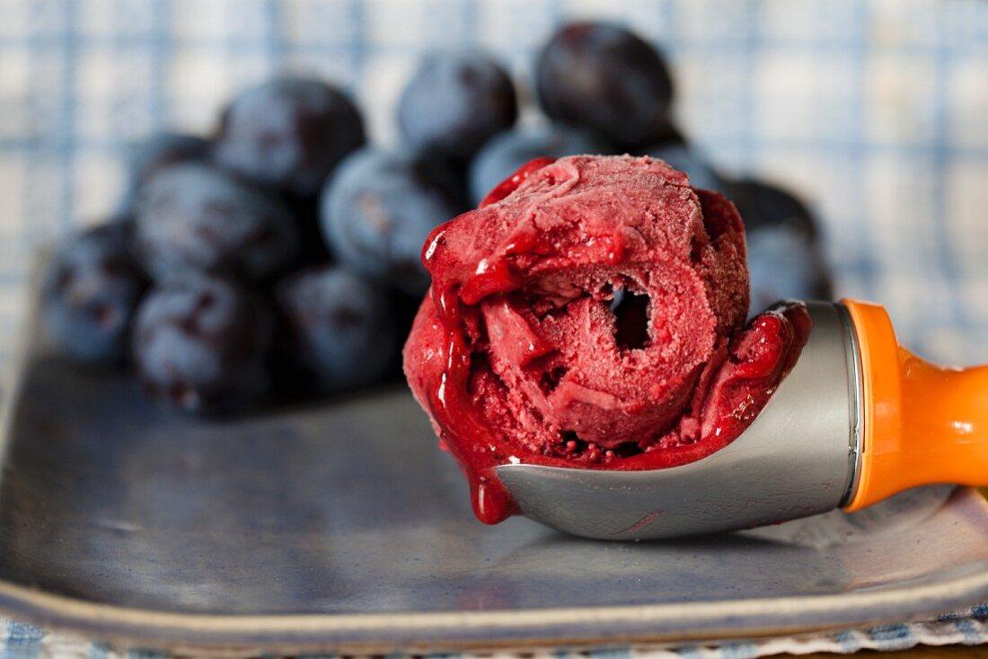 Plum sorbet in an ice cream scoop in front of fresh plums