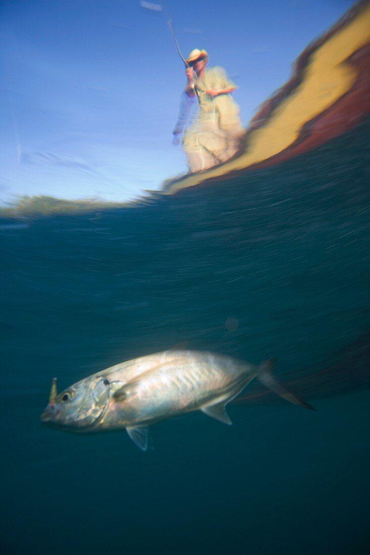 Underwater View of Fish Getting Caught