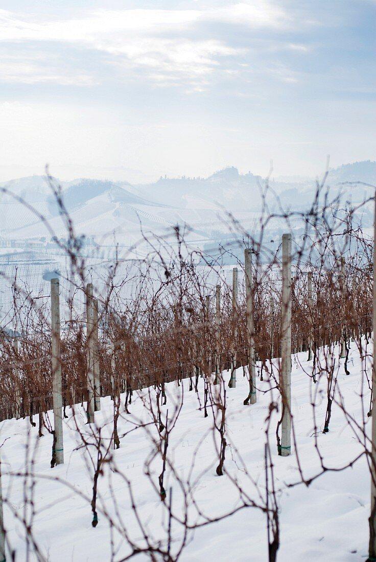 Vineyard in Winter, Italy