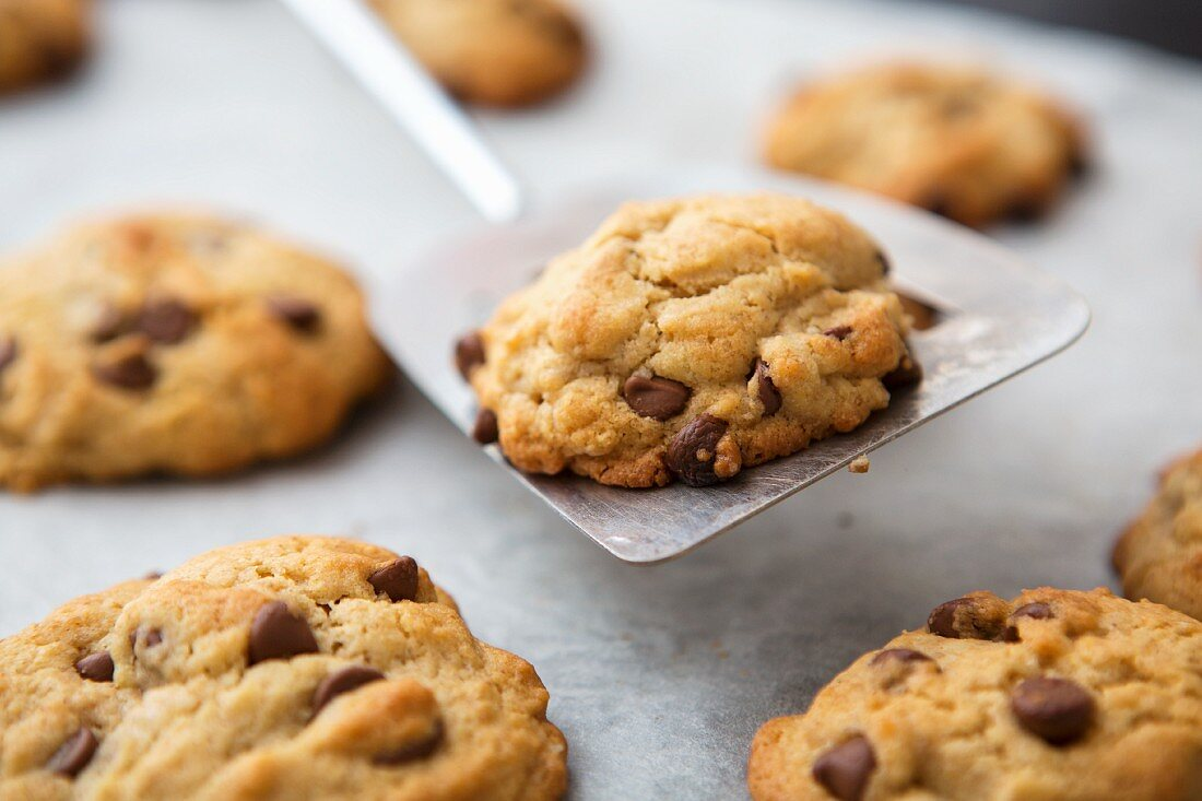 Freshly baked chocolate chip cookies on a spatula and on a baking tray