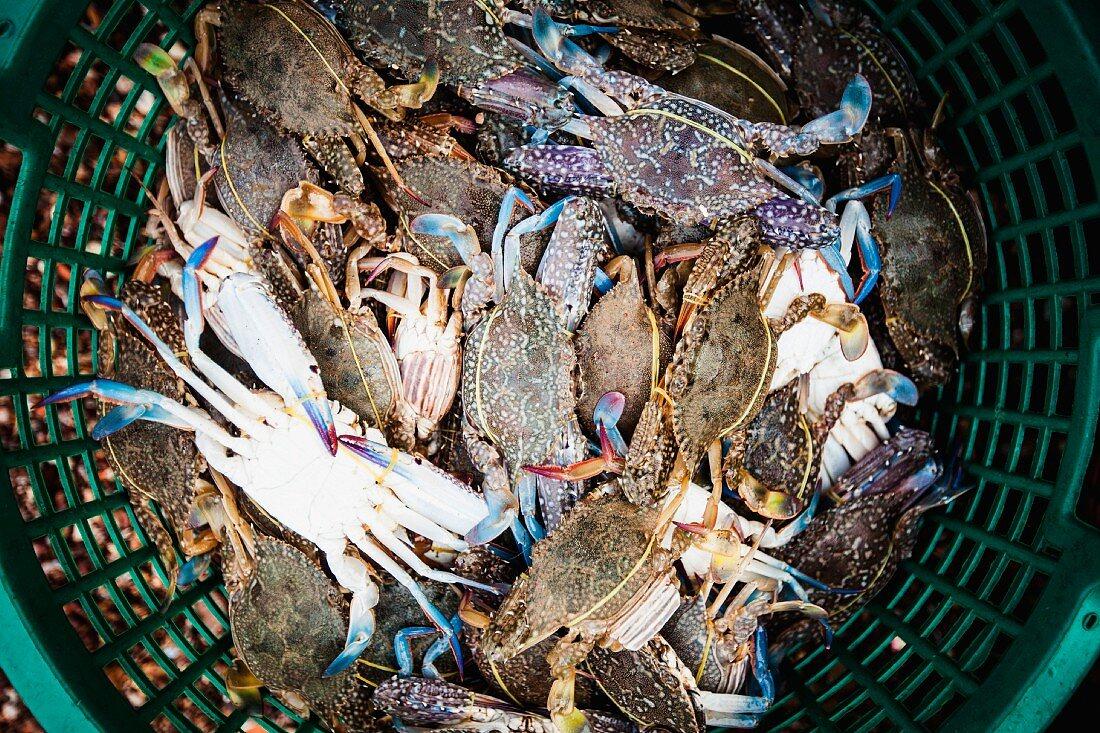 Basket of Crabs, High Angle View