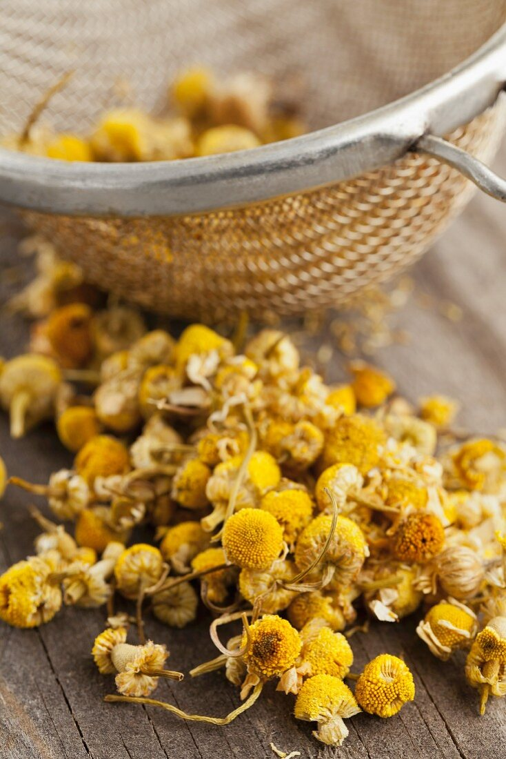 Dried camomile flowers in a tea strainer and next to it