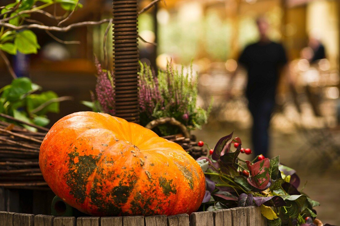 Autumnal garden decoration with a pumpkin and heather