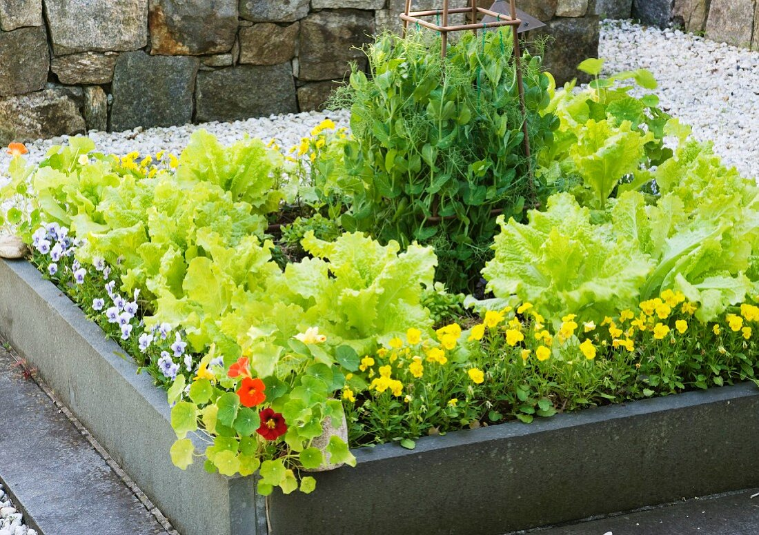 Flowers and vegetables growing in a raised bed