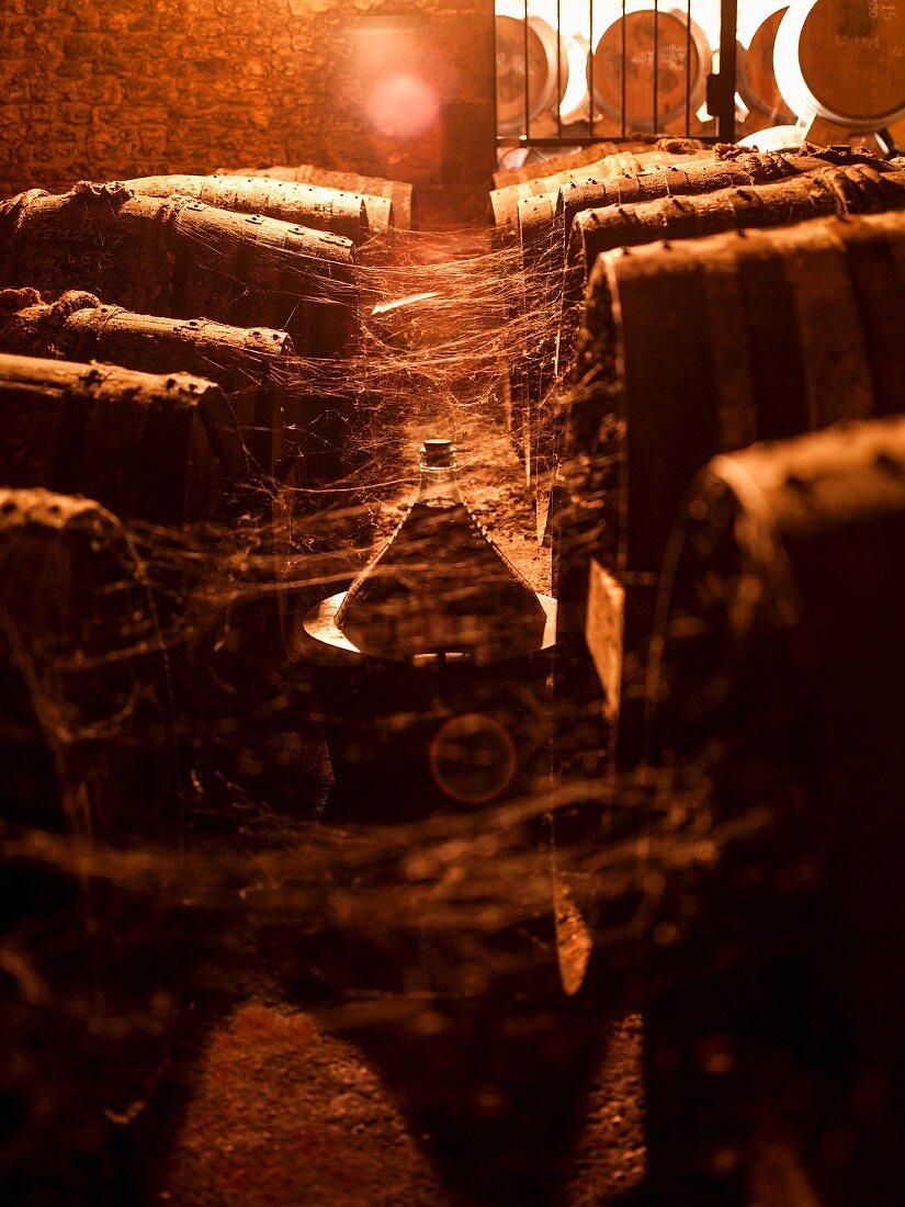 Old cognac barrels with spiderwebs in a wine cellar