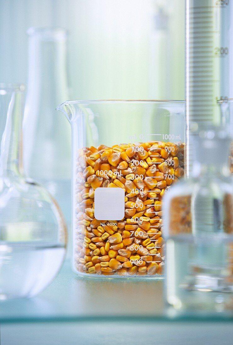 Corn kernels in measuring jug