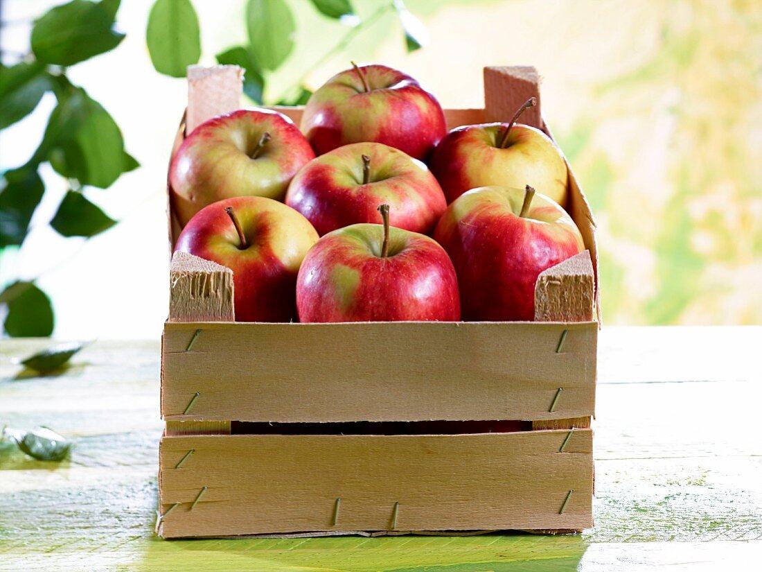 A crate of Elstar apples