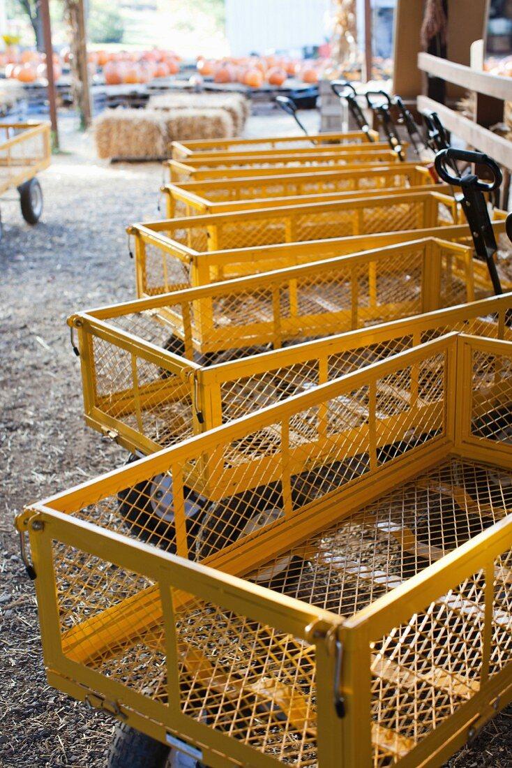 Yellow transportation wagons on a farm