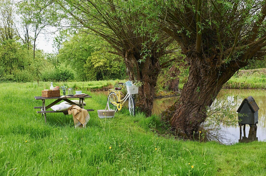 Idyllic picnic spot with old trees and pond