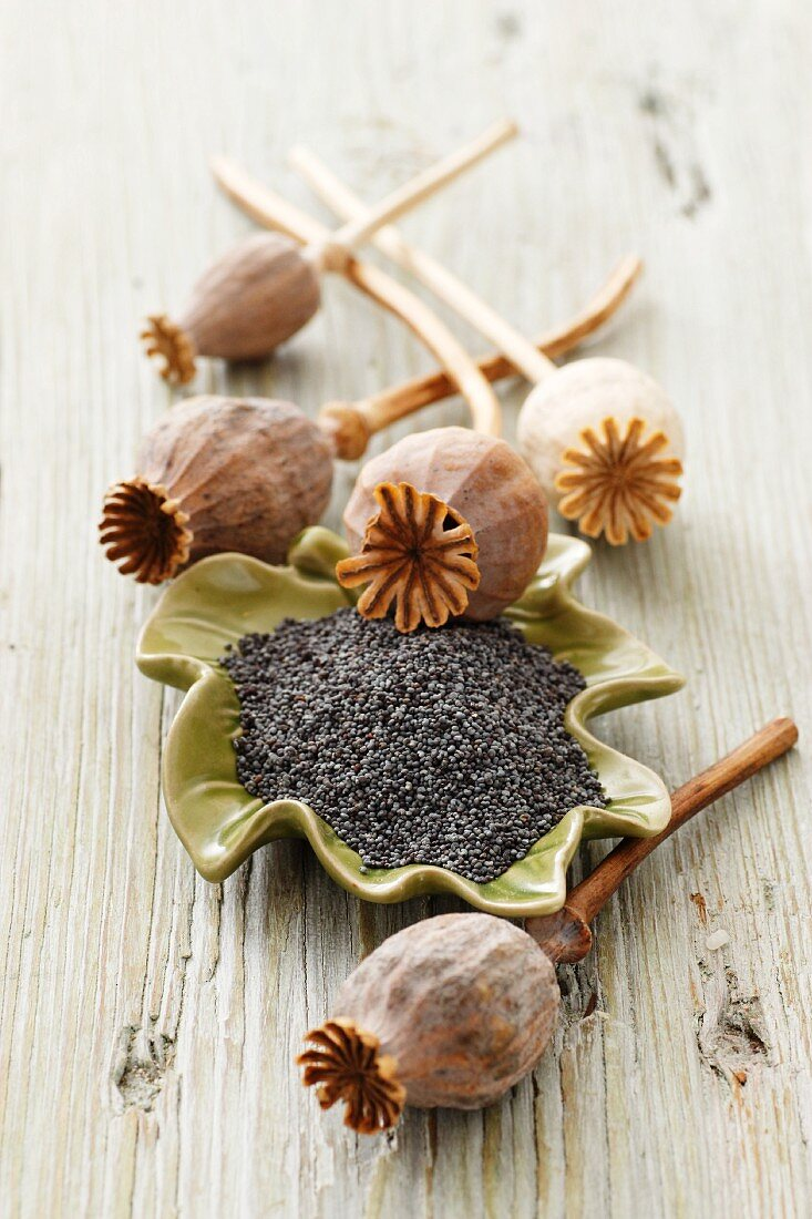 Poppyseeds in a dish with poppy seed pods