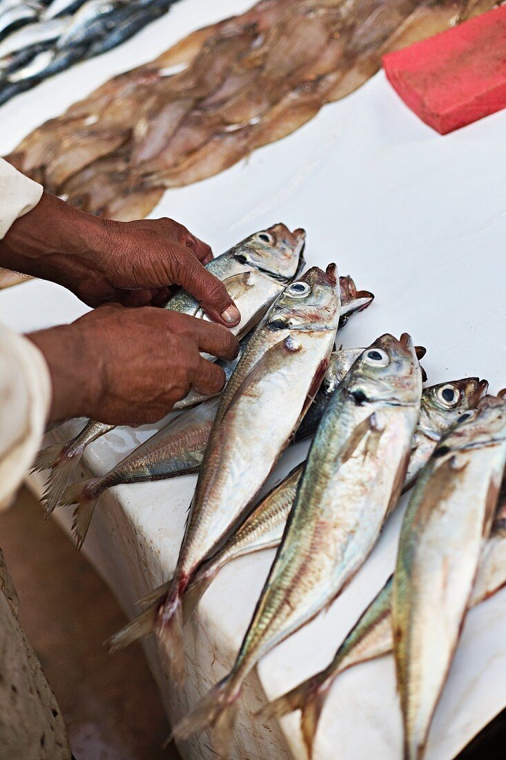 Fish at the fish market in Essaouira, Morocco