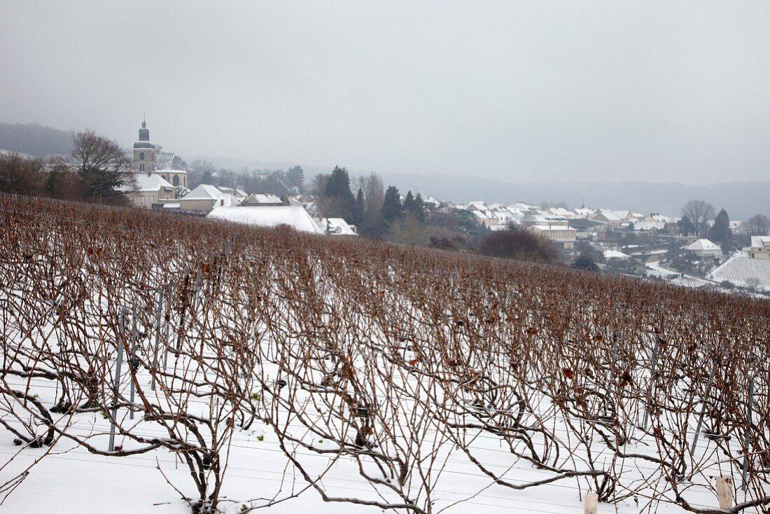 Weinberg unterhalb der Abtei von Hautvillers, wo Dom Perignon begraben ist, Epernay, Marne, Frankreich