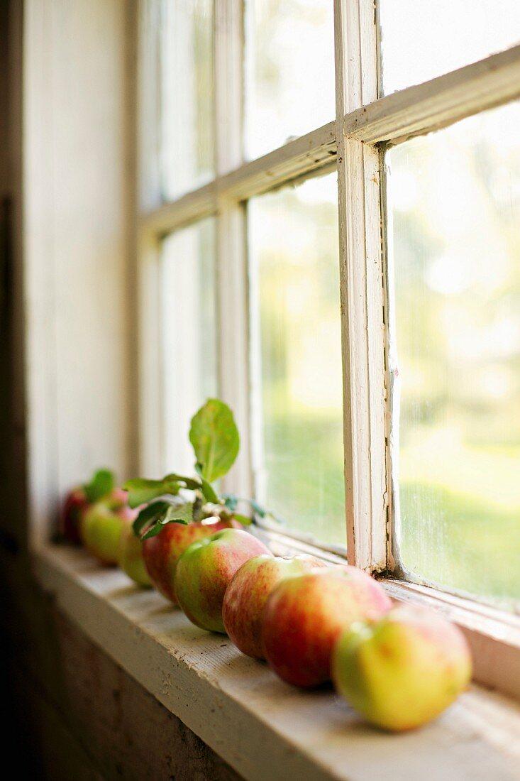 A row of fresh apples on a window sill