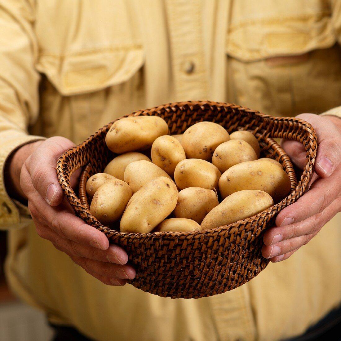 A man holding a basket of small Yukon Gold potatoes
