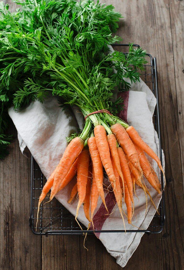 Fresh garden carrots on a tea towel