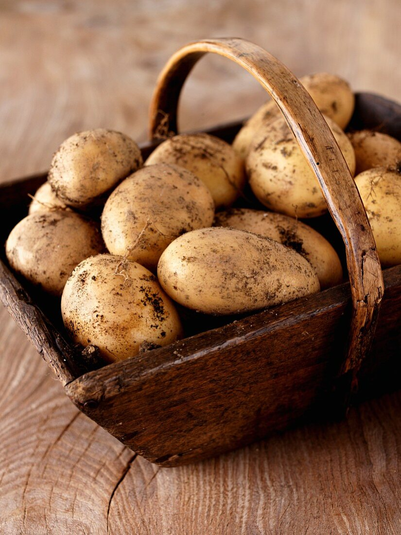 Freshly harvested potatoes in a wooden basket