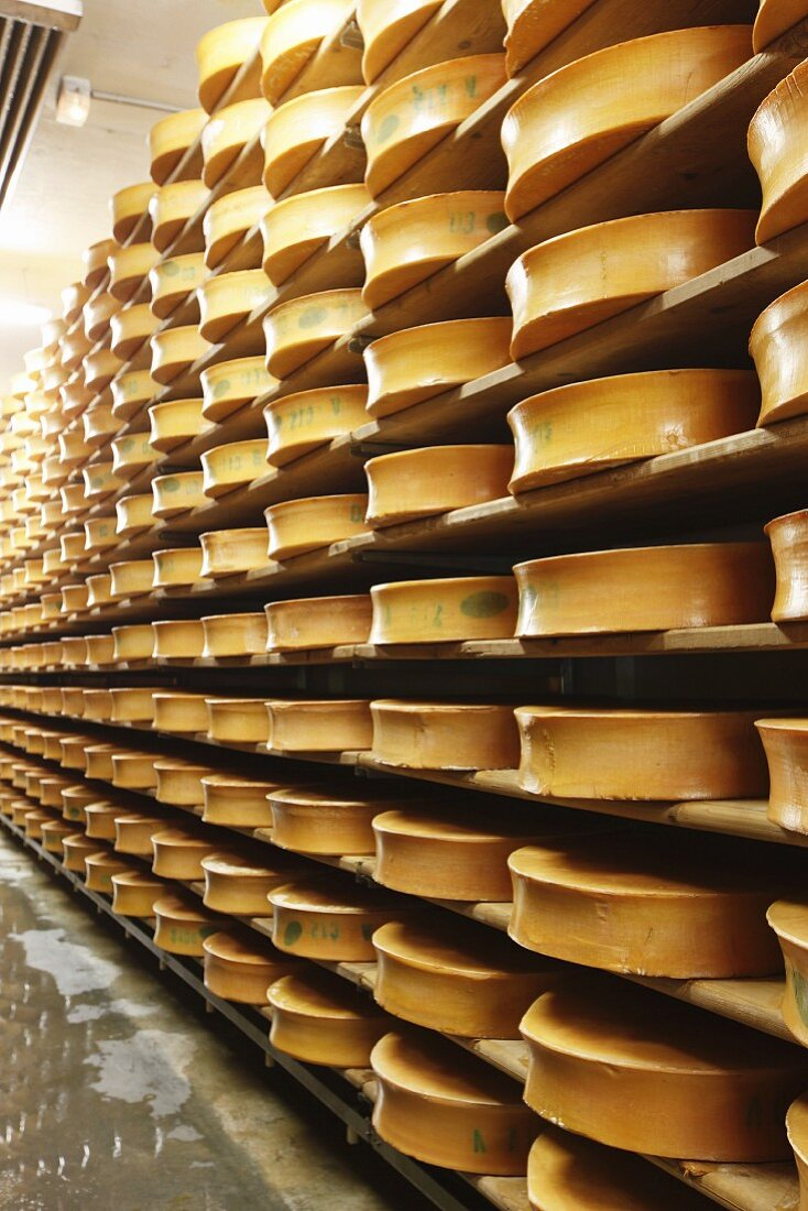 Beaufort (French cheese) in a ripening warehouse