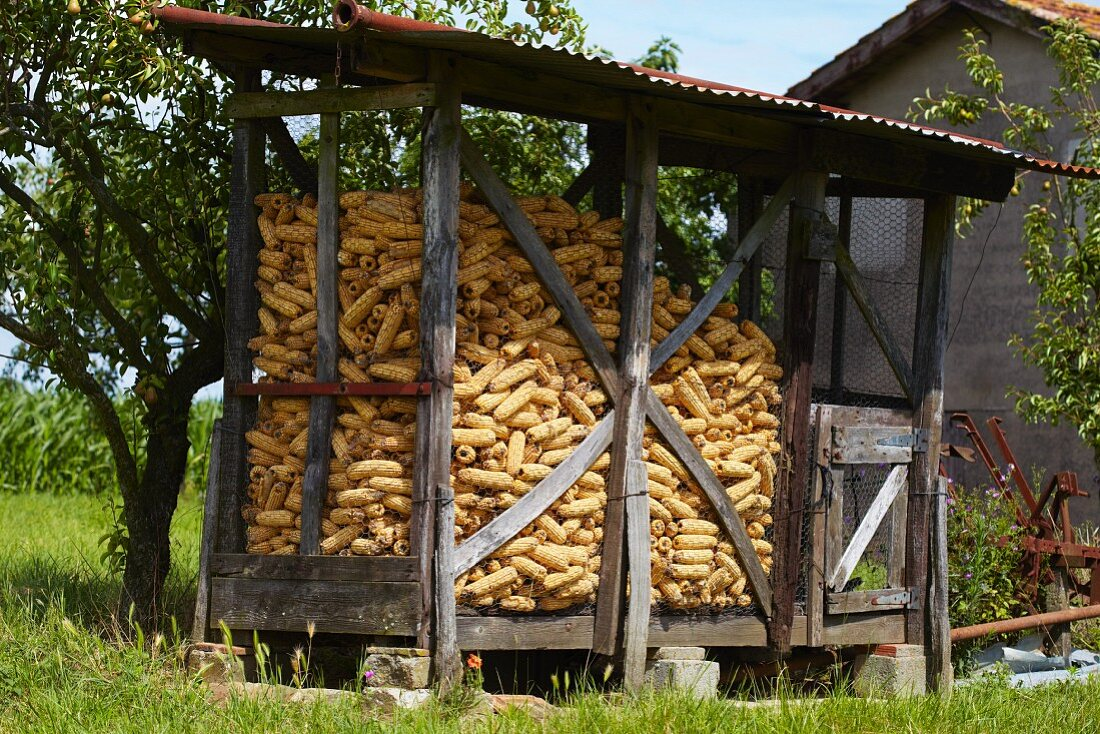 A hut for storing corn cobs in France