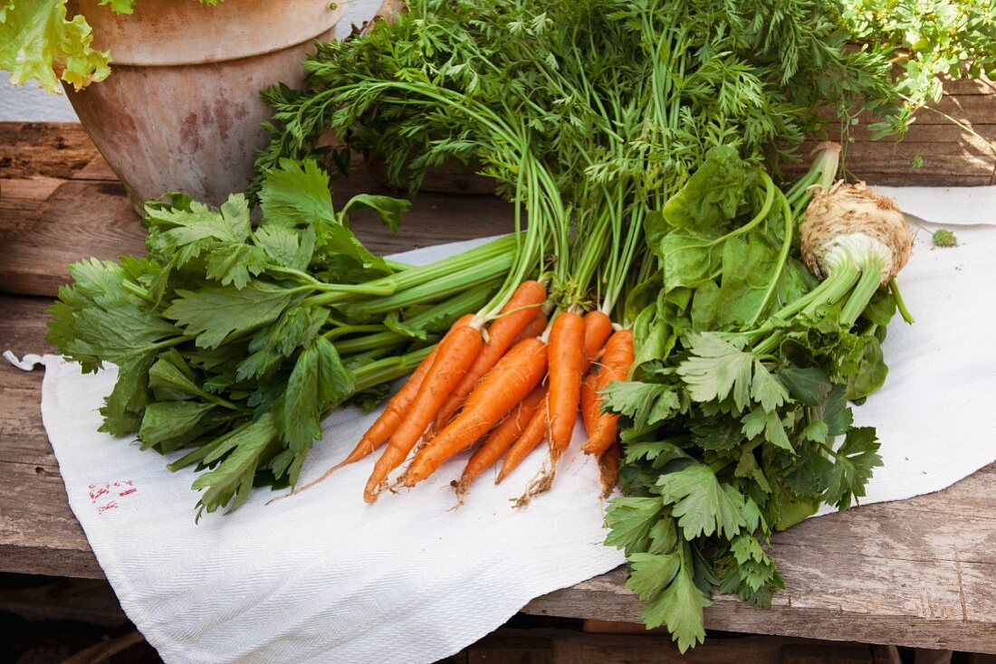 Various organic vegetables on a linen cloth on a wooden table: celery, carrots, spinach and celeriac