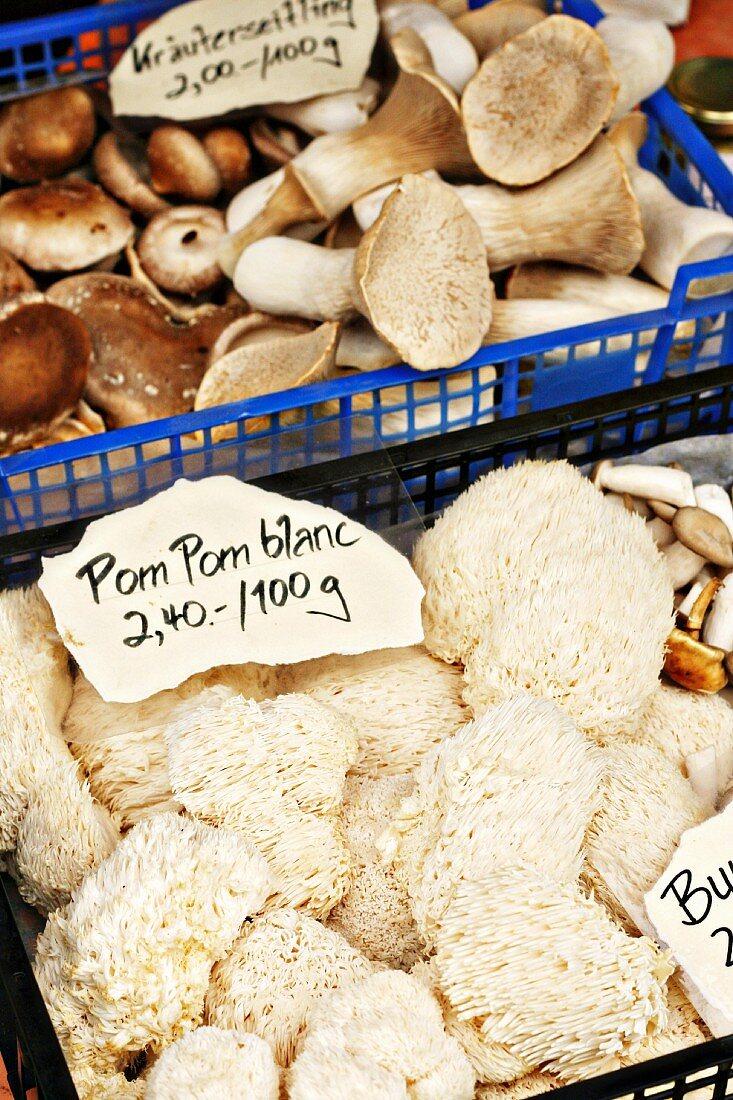 Pilze der Sorte Pom Pom Blanc und Kräuterseitlinge auf dem Markt