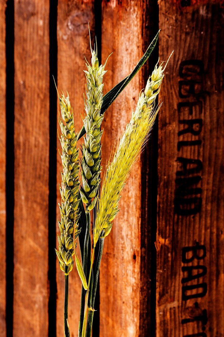 Ears of grain in front of a wooden crate