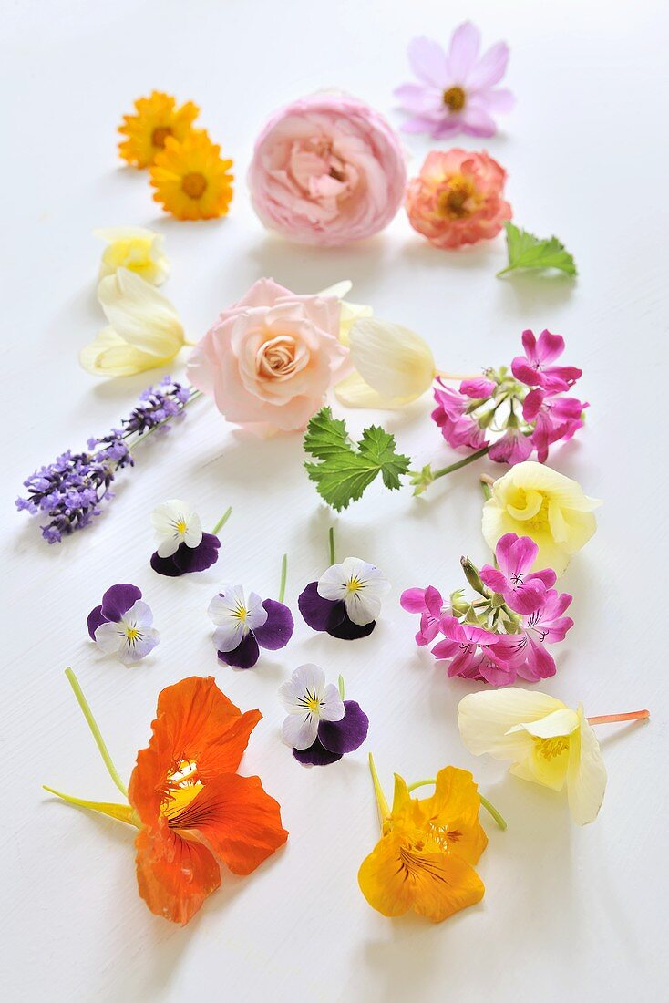Assorted edible flowers