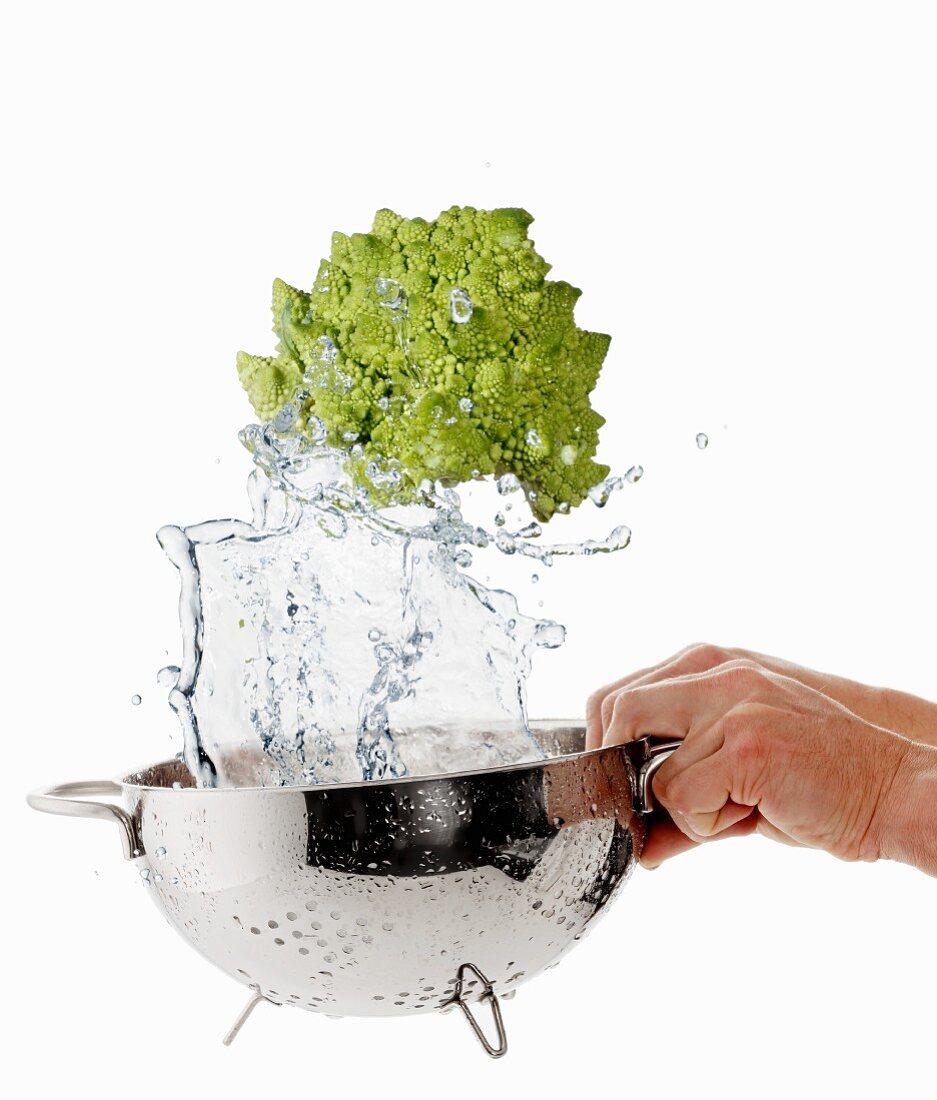 Washing Romanesco broccoli in a colander