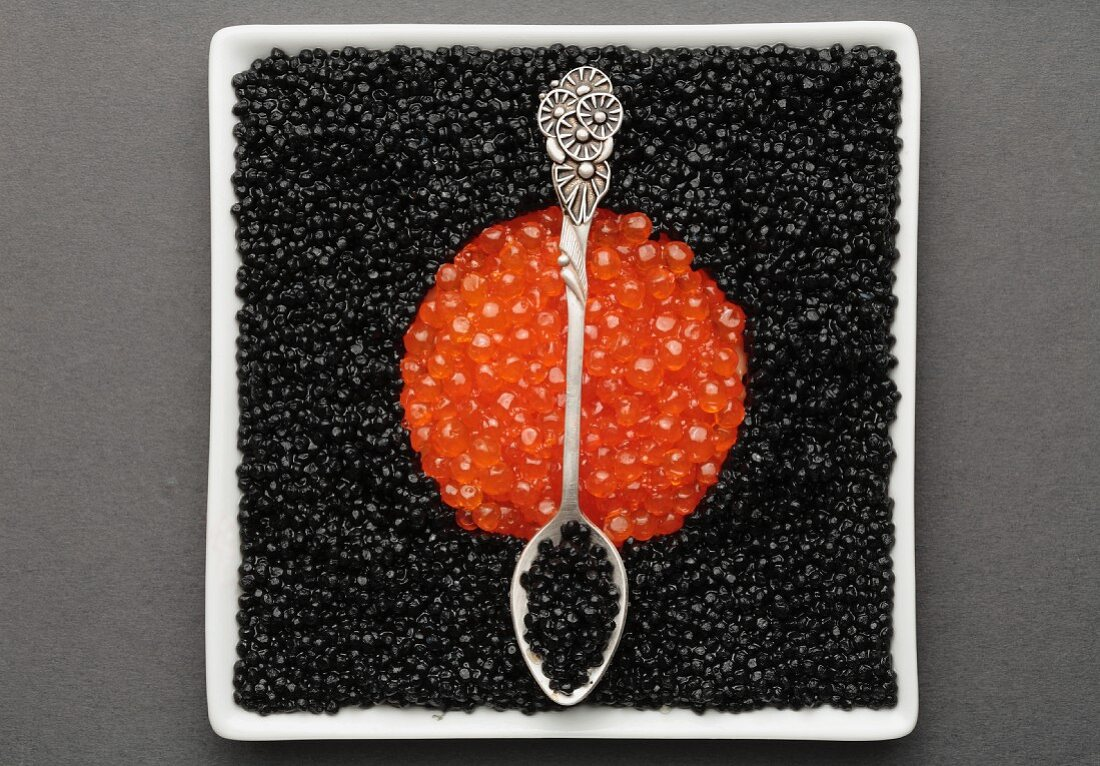 Black caviar and sturgeon caviar with spoon on a square plate