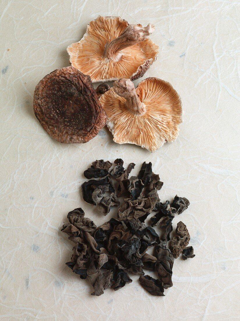 Japanese mushrooms (shiitake, kikurage)