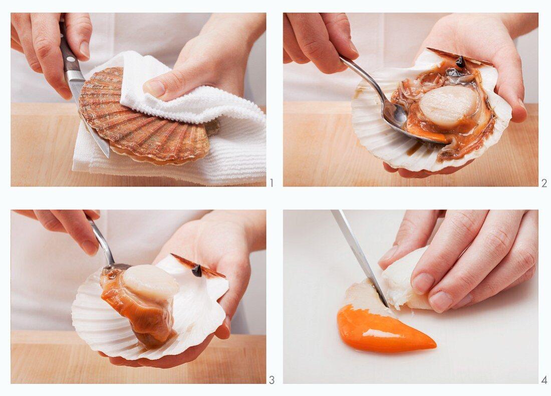 Shucking and preparing a scallop