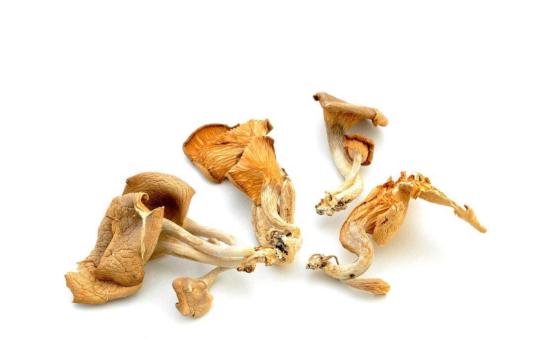 Dried abalone mushrooms