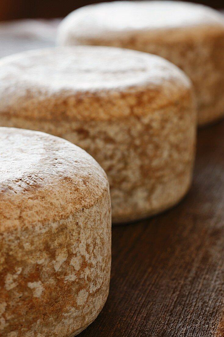 Three Wheels of Sheep Cheese on Wood