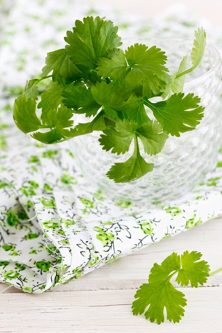 Fresh coriander in a glass of water