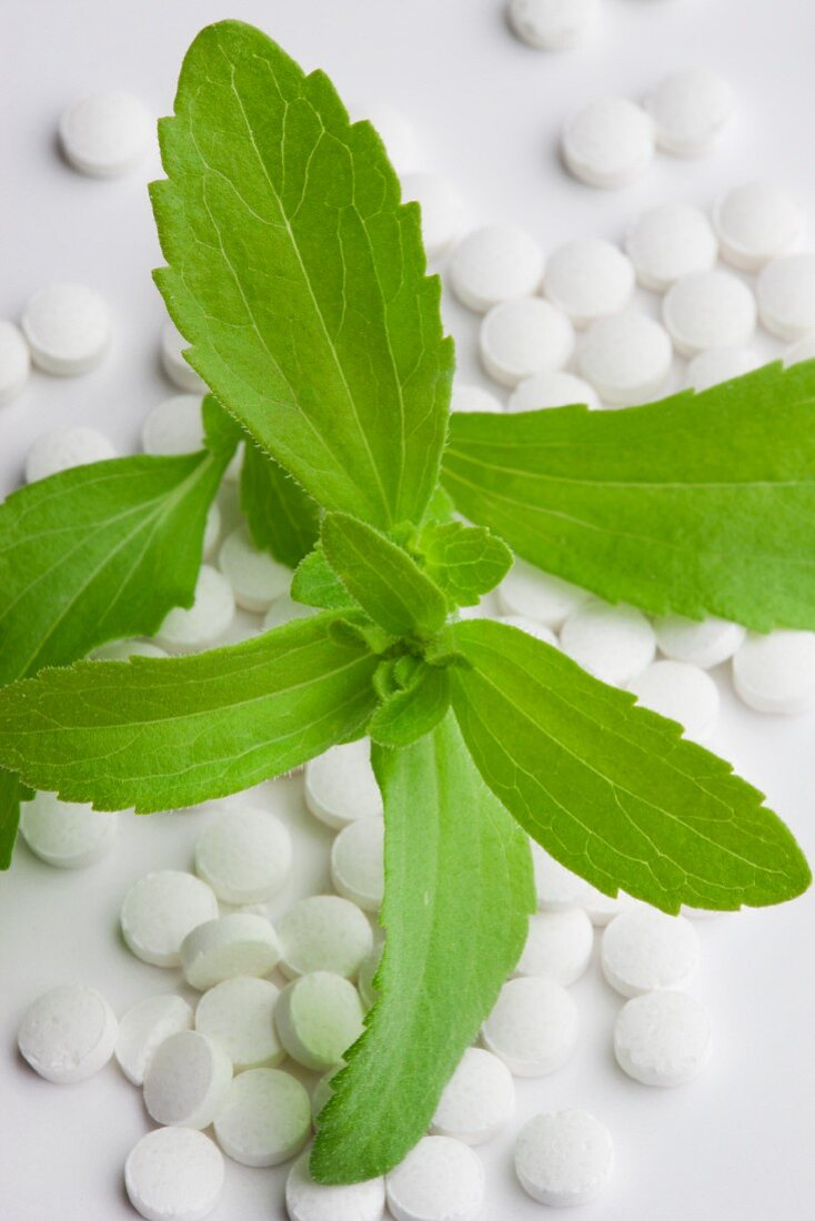 Stevia plant leaves and stevia tablets