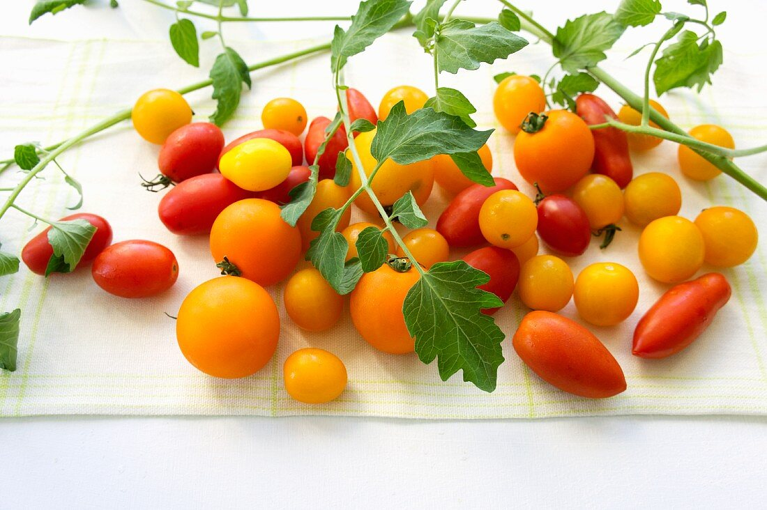 Yellow cocktail tomatoes, plum tomatoes and tomato leaves