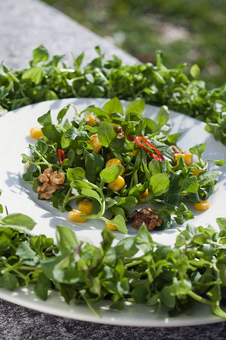 Salad with chickweed (stellaria media), sweetcorn and nuts