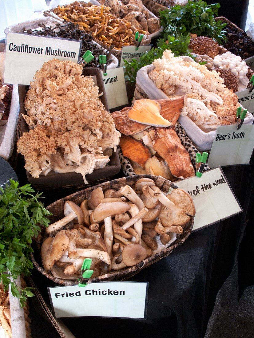 Unusual types of mushrooms at a market