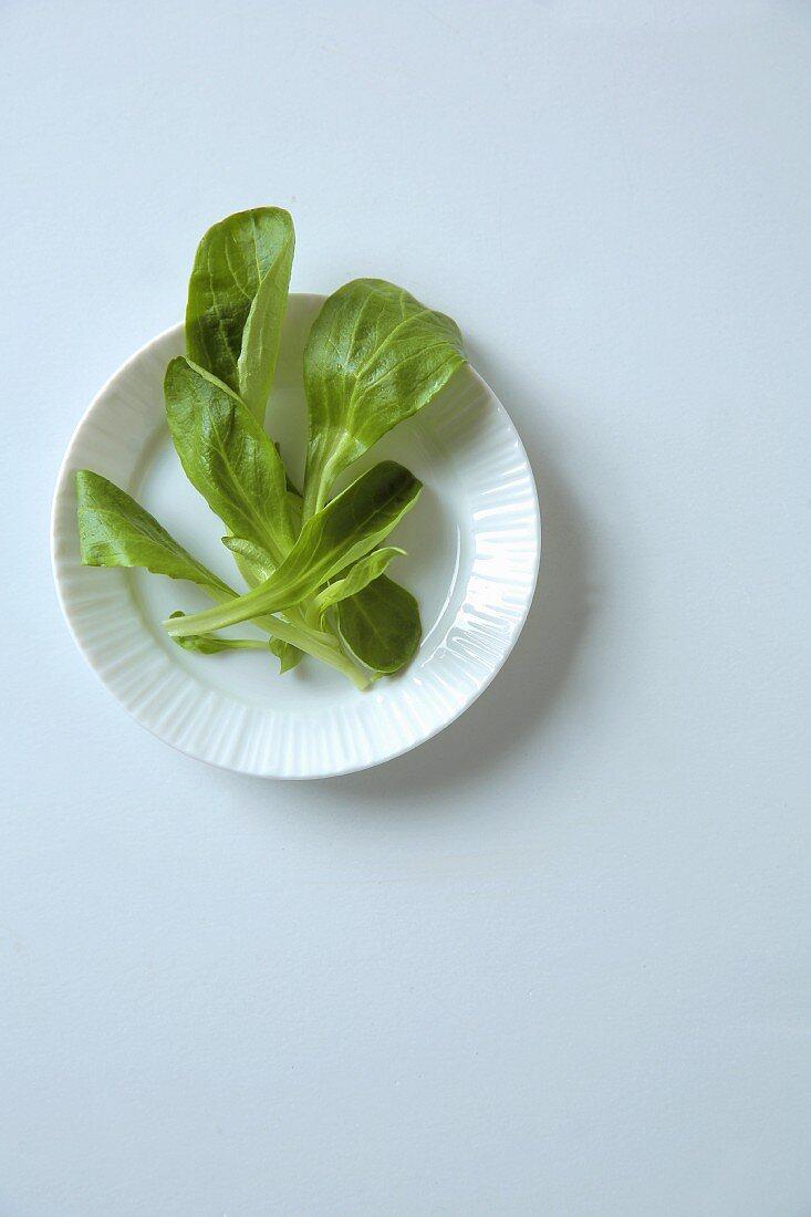 Lamb's lettuce in a bowl