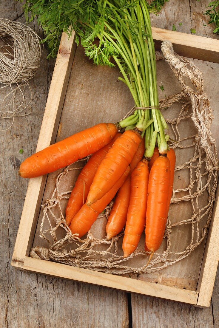A bunch of carrots lying on a net in a shallow wooden crate