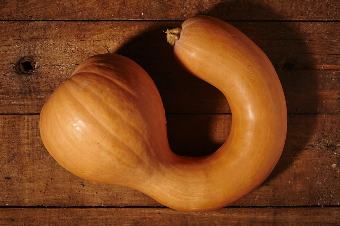 A long neck squash (a larger version of an acorn squash) on a wooden surface