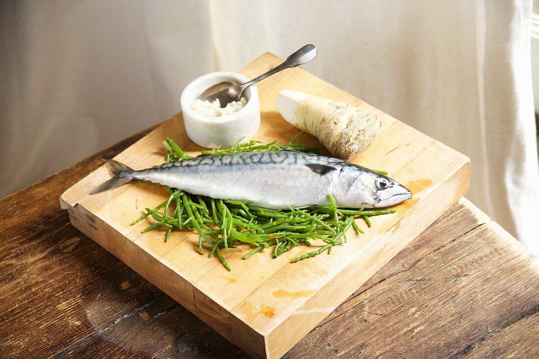 Fresh mackerel with horseradish and samphire on a wooden board